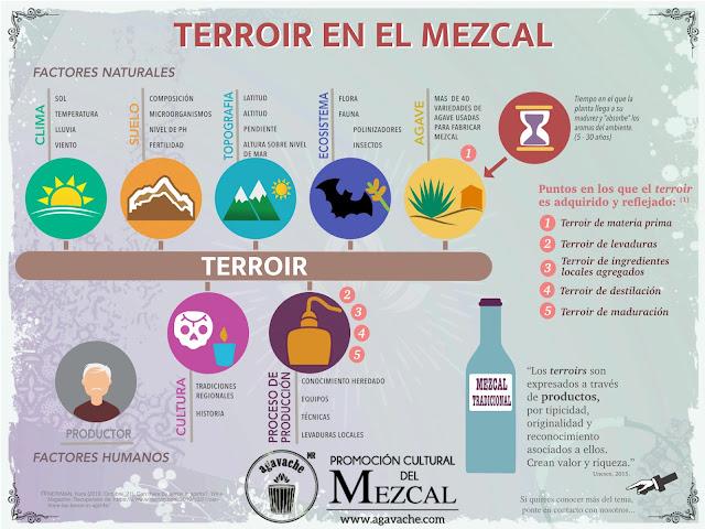 Existe el terroir en el Mezcal? Los 5 puntos claves en los que interviene.